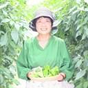 【ふるさと納税】高知県産 植田ファームのこだわりピーマン 【3kg】