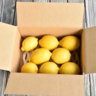 【ふるさと納税】人気ローズガーデンの減農薬レモン1.5kg送