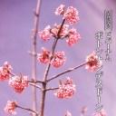 【ハナヒロバリュー】 ビバーナム ボトナンデスドーン 3.5号ポット苗