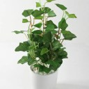 光触媒 人工観葉植物 光の楽園 ミニグリーンポット 選べる3タイプ アイビー/ポトス/カラジューム【フェイクグリーン 観葉植物 人工樹木 造花】