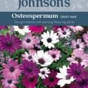 【輸入種子】Johnsons SeedsOsteospermum DAISY MAEオステオスペルマム デイジー マエジョンソンズシード