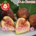 福岡県産 JAふくおか嘉穂 いちじく「博多とよみつひめ」300g×4P
