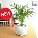 サーフインテリア(西海岸風)におすすめの観葉植物6選!お手入れ方法も