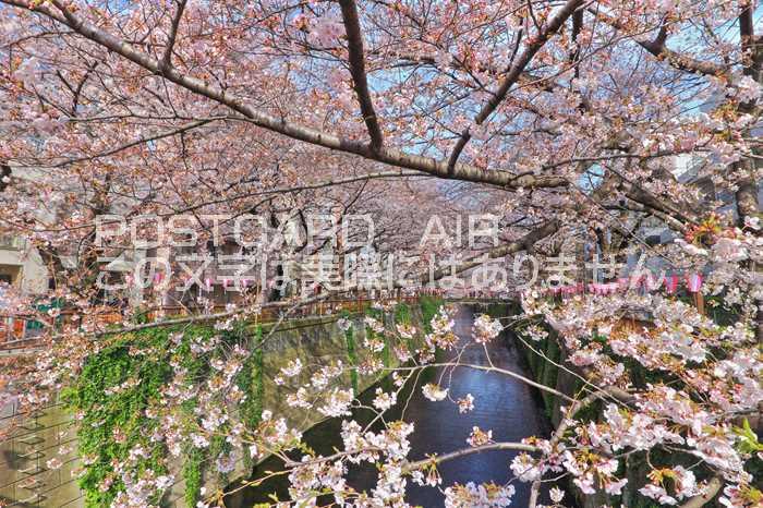 【日本の風景ポストカードAIR】目黒川 桜並木のはがきハガキ葉書 撮影/kazu