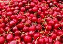 絵画風 壁紙ポスター (はがせるシール式) 真っ赤なチェリー サクランボ さくらんぼ フルーツ 果物 キャラクロ FFRT-014A2 (A2版 594..