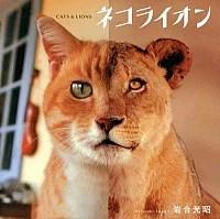 【中古】【全品10倍!10/30限定】ネコライオン / 岩合光昭