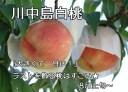 もも 減農薬 和歌山県 産地直送 あら川の桃 川中島白桃(最高級)4〜5Lサイズ 約4kg(約11〜12玉)【発送:8月上旬頃〜 8月中旬頃】