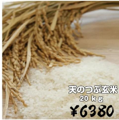 福島県産天のつぶ玄米20キロ(玄米・30年産)20kg 送料無料!(一部地域:北海道・中国・四国地域