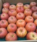 【早い者勝ち】青森県産 サンふじ 50玉 果物 リンゴ 林檎|89179:フルーツ・果物
