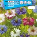 花種  NL150 ニゲラ ミスジーキル混合 小袋 [FZZ775]【花の種】【タキイのタネ】【ガーデニング】