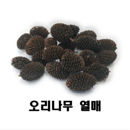 오리나무 열매 20개 새우 베타 블랙워터 PH하강