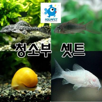 [열대어 물고기 구피 어항 청소고기 세트]비파1마리/애플스네일2마리/ 화이트 브론즈 페퍼드 섞어서 4마리[총 7마리]아쿠아펫 3만원이상주문시 사은품증정, 1개