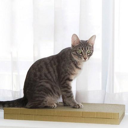 네이쳐리빙 토모 고양이 장난감 평판 스크래쳐, 혼합 색상, 2개입