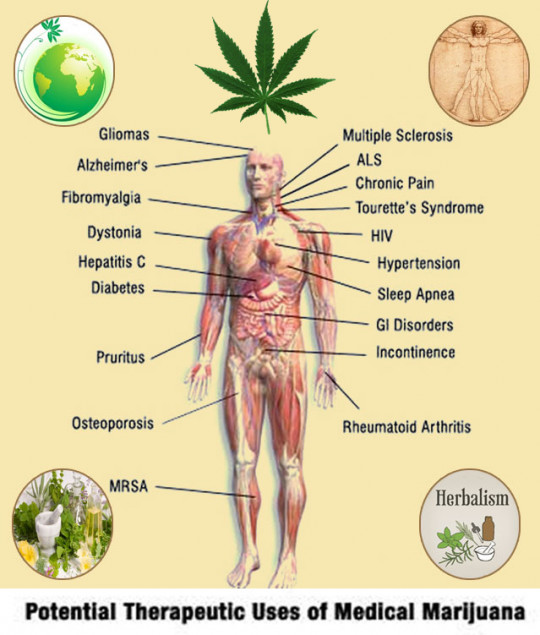 Herbal Benefits of Medical Marijuana