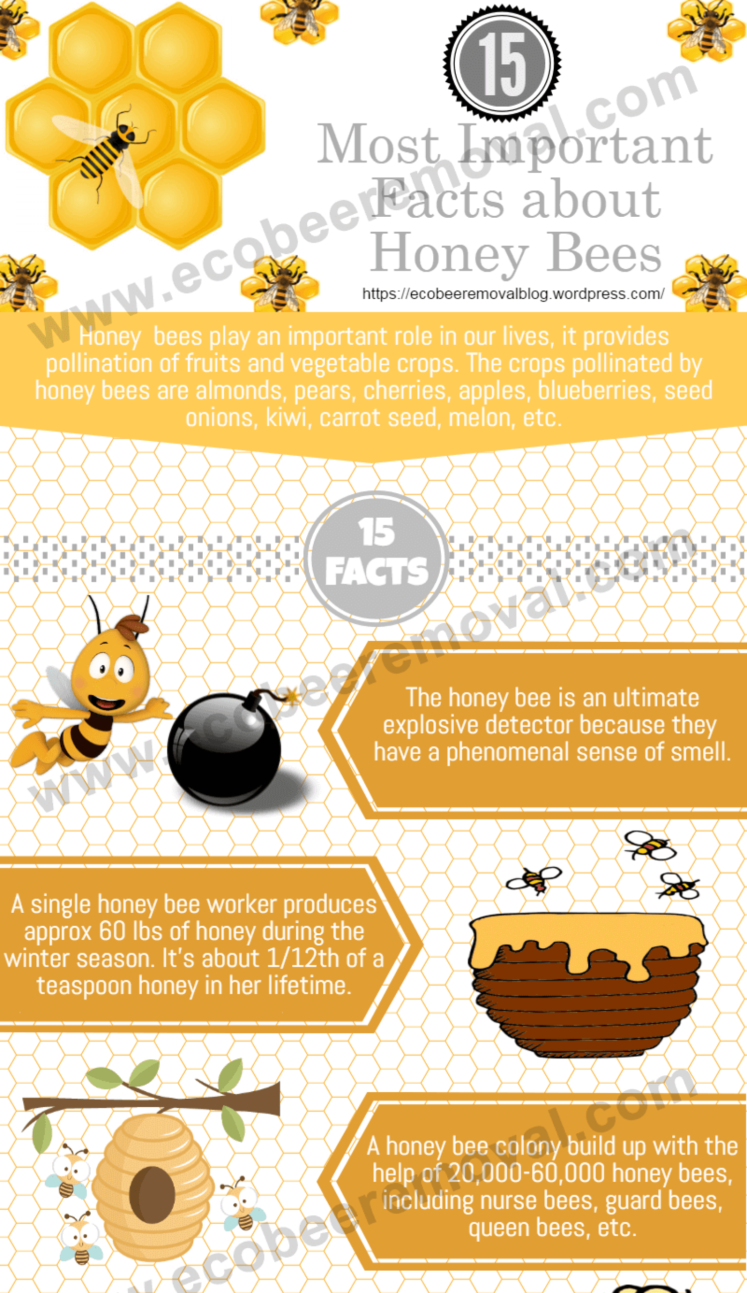 Know Some Important Facts About Honey Bees