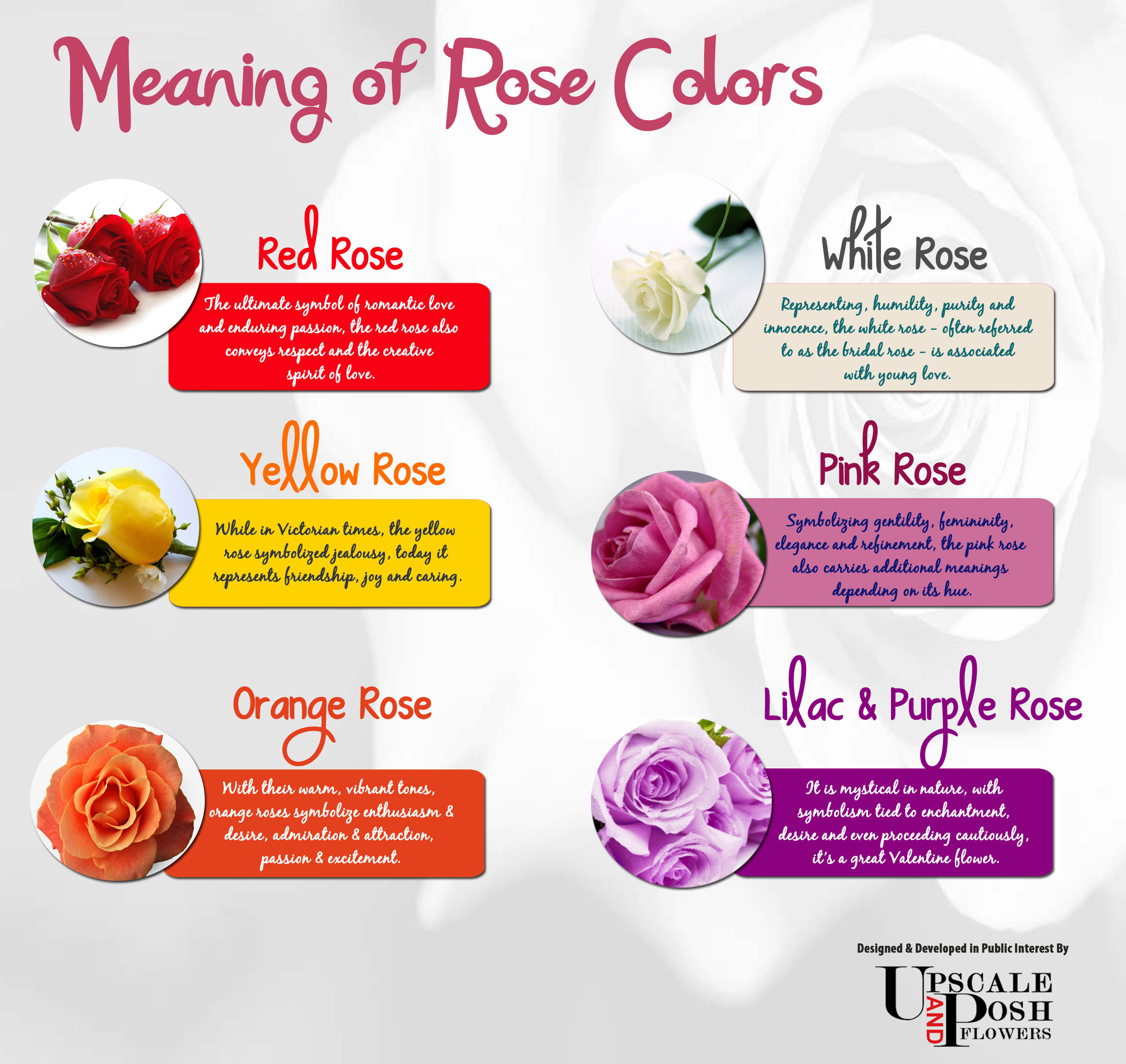 Rose And Symbolism Meanings
