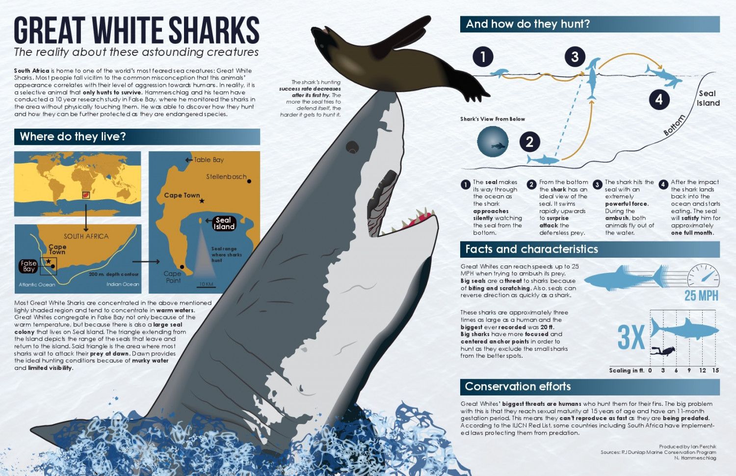 The Science Behind Great White Shark Predation