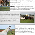 Top Horse Breeds And Disciplines Defined Visual Ly