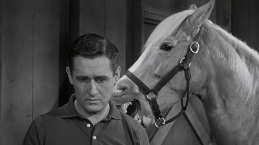 "Mister Ed says: ""If horses evolved, why are they still showing my re-runs?"""