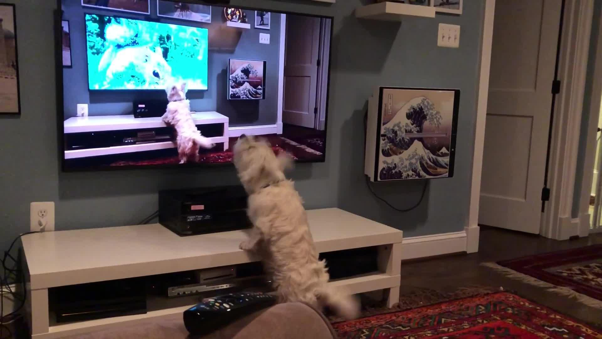 Dog Barks Seeing A Video Of Herself Barking On Tv Jukin Media Inc