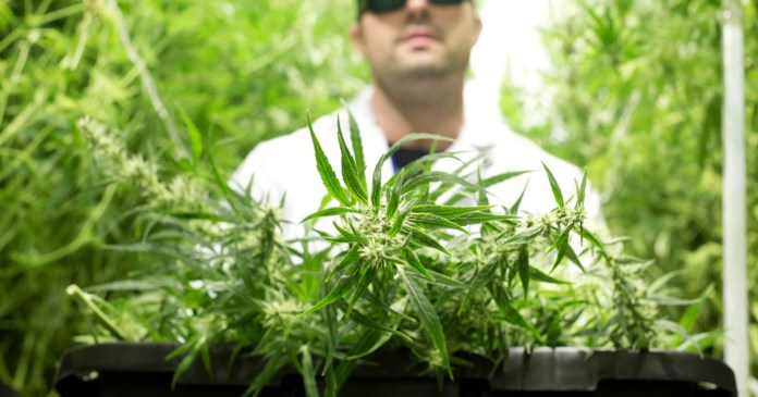 Texas' medical cannabis program could expand under bill preliminarily OK'd by House