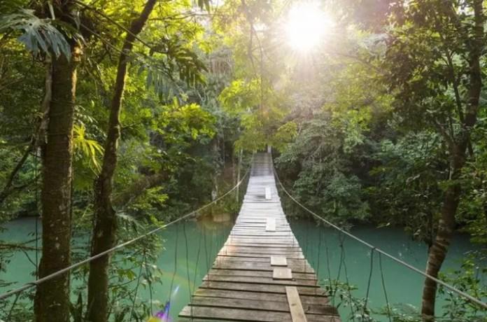 A hanging bridge in Cayo's jungles...