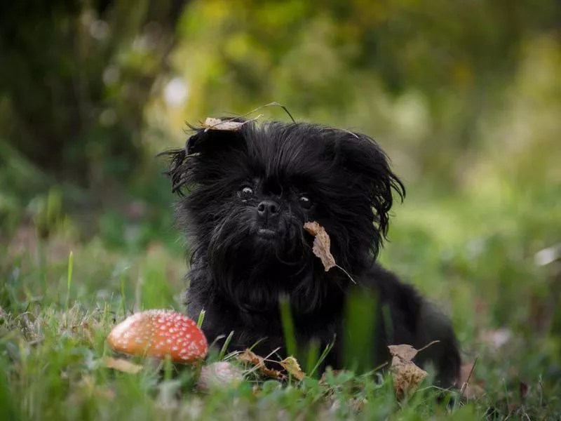 50 Best Small Dog Breeds Familyminded