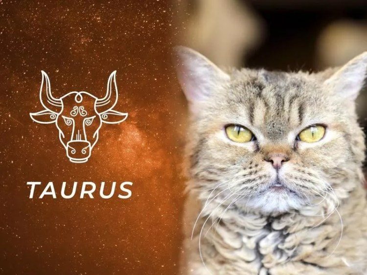 Best Cat Breeds for All 12 Horoscope Signs | Always Pets