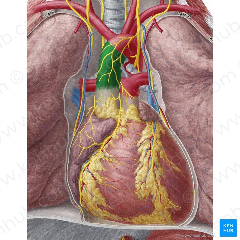 Anatomy Lower Left Abdomen