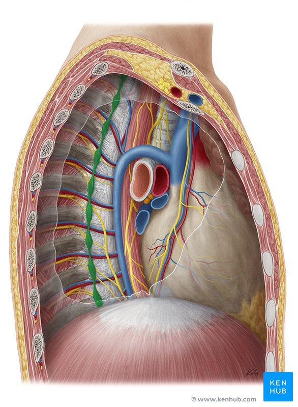 Sympathetic nervous system: Definition, anatomy, function ...