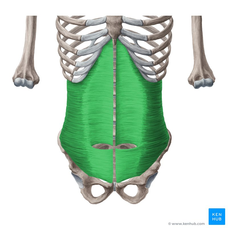 Internal Intercostal Muscles Origin