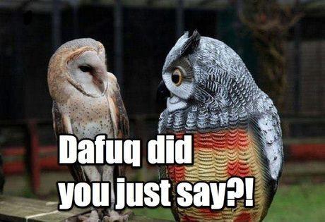 Hilariously Adorable Owl Memes 10