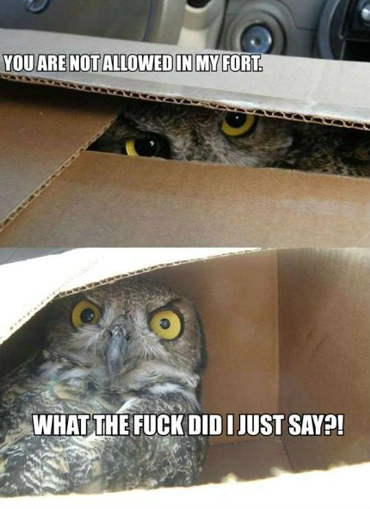 Hilariously Adorable Owl Memes 13