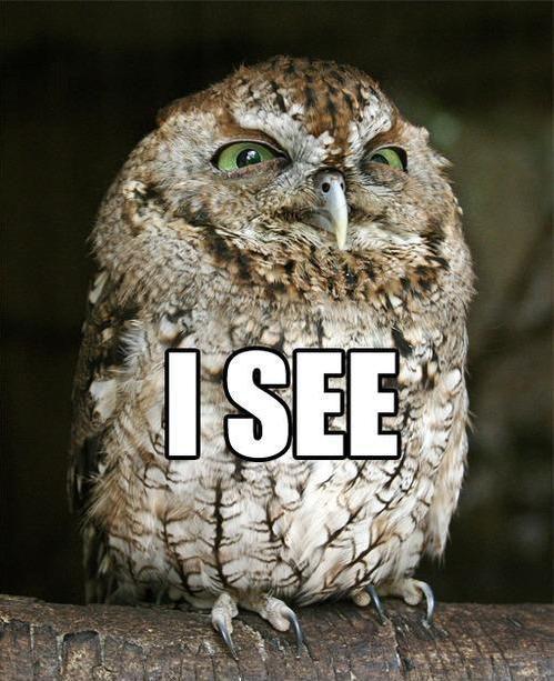 Hilariously Adorable Owl Memes 5