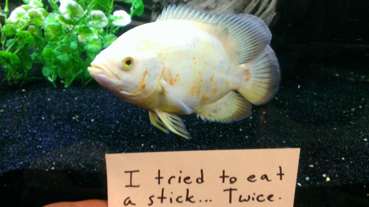 After Dog Shaming We Present You Fish Shaming 10 Pics
