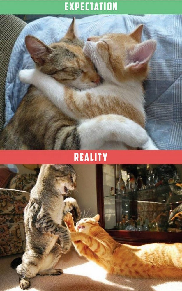 Expectations Vs Reality With Cats