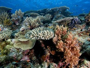 Could Floating Cold Water Over the Great Barrier Reef Save Corals?  |  Science