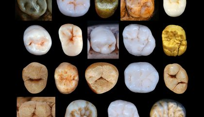 The Teeth of Early Neanderthals May Indicate the Species' Lineage Is Older Than Thought