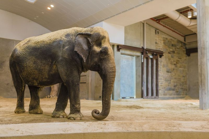 National Zoo Mourns Death of Asian Elephant | At the Smithsonian |  Smithsonian Magazine