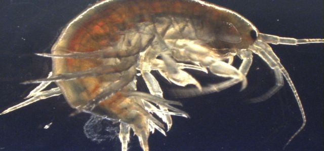 Traces of Cocaine Found in U.K. Shrimp