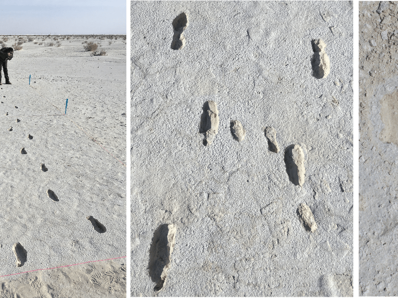 Fossilized Footprints Found in New Mexico Track Traveler With Toddler in Tow