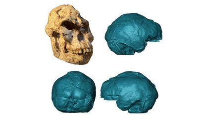 Detailed Scans of Ancient Human Skull Reveal Structure of the Brain and Inner Ear