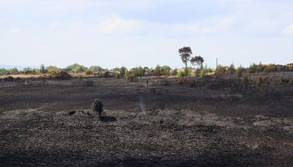 Fire Tore Through the Forest That Inspired Winnie the Pooh's 'Hundred Acre Wood'