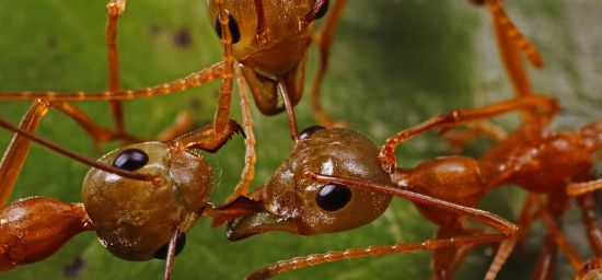 Humans and Ants Engage in Similar Types of Warfare