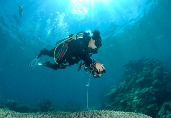 A scuba diver is seen holding a camera in in Far Northern Great Barrier Reef on Ashmore Bank