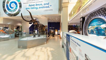 Here Are 12 Things You Might Miss in the Smithsonian's New Fossil Hall
