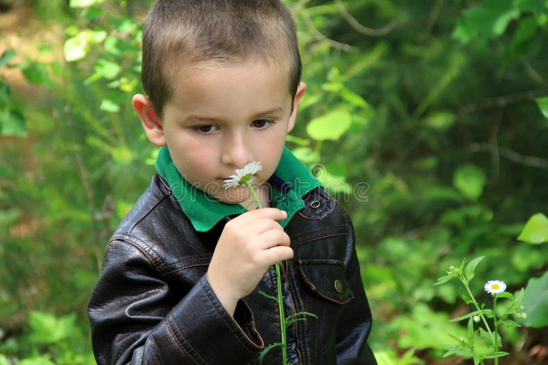 Download Adorable Little Boy Smelling A Daisy Stock Image - Image ...