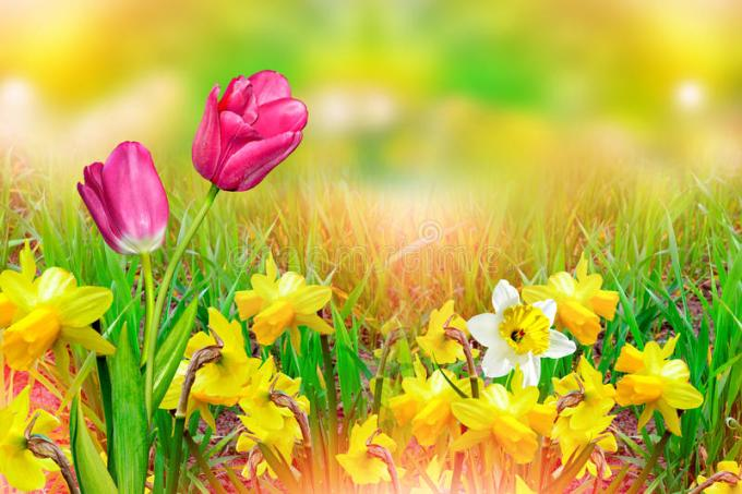 Images of spring flowers daffodils siewalls beautiful spring flowers daffodils yellow stock image mightylinksfo