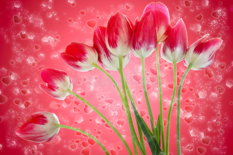 Bouquet Of Fresh Tulips Flowers On Red Background Stock