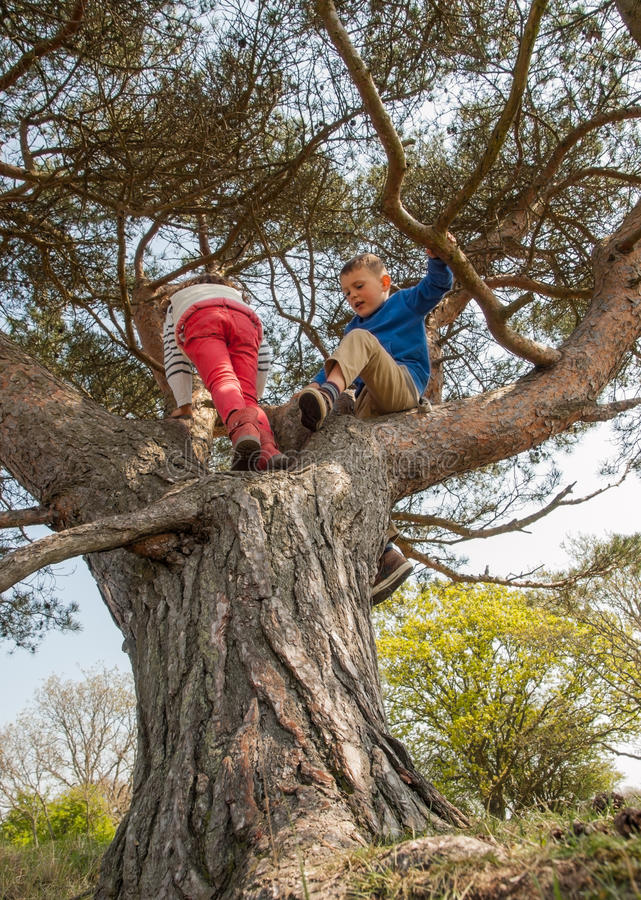 Boy And Girl Climbing In A Tree Stock Image Image Of